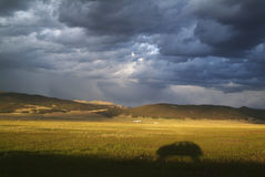 Ajardine com uma sombra do carro e um céu tormentoso Fotografia de Stock