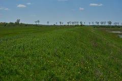 Ajardine com uma terraplenagem gramínea e as árvores no fundo Fotografia de Stock Royalty Free