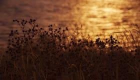 Ajardine com uma vista da costa de mar no por do sol 1 Fotos de Stock Royalty Free