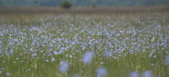 Ajardine com uma vista do prado do verão Imagem de Stock