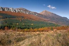 Ajardine com uma vista no pico de montanha Imagens de Stock