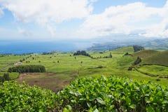 Ajardine com vacas, Sao Miguel, as ilhas de Açores, Portugal Fotografia de Stock Royalty Free