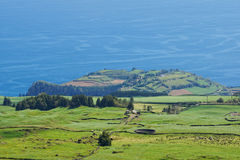 Ajardine com vacas, Sao Miguel, as ilhas de Açores, Portugal Fotos de Stock