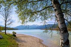 Ajardine com vidoeiro, lago e os cumes bávaros no backgrou Imagens de Stock Royalty Free