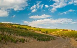 Ajardine com vinhedo novo e a estrada suja em montanhas crimeanas Imagens de Stock