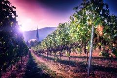 Ajardine com vinhedos do outono e igreja da cidade pequena Fotografia de Stock Royalty Free