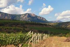 Ajardine com vinhedos e montanhas no fundo do céu azul Fotografia de Stock Royalty Free