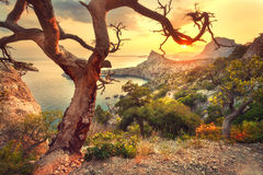 Ajardine com vista bonita no vale da montanha e na árvore velha Imagem de Stock