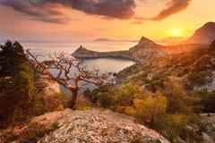Ajardine com vista bonita no vale e na árvore da montanha Imagem de Stock