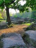 Ajardine como se de um conto de fadas com as grandes pedras dos vários formulários que encontram-se perto de uma árvore Foto de Stock Royalty Free