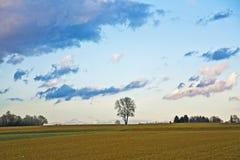 Ajardine con acres, árboles y nubes oscuras Fotografía de archivo libre de regalías