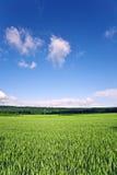 Ajardine con acres, maíz y nubes blancas Imagen de archivo libre de regalías