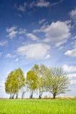 Ajardine con algunos árboles y nubes en un cielo azul Fotografía de archivo