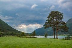 Ajardine con el árbol de pino, el lago y el cielo de la tormenta, Noruega Imagen de archivo libre de regalías
