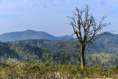 Ajardine con el árbol muerto después de invierno en Laos Imagenes de archivo