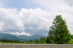 Ajardine con el árbol y la hierba verdes en las colinas de las montañas Siberia, Rusia de Altai Imagen de archivo