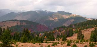 Ajardine con el bosque colorido encendido por la luz del sol adentro en las montañas Imagen de archivo