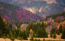 Ajardine con el bosque colorido encendido por la luz del sol adentro en las montañas Imagen de archivo libre de regalías