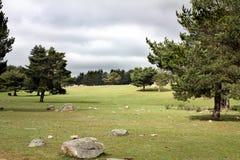 Ajardine con el césped, las rocas y los árboles de pino Fotografía de archivo libre de regalías