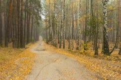 Ajardine con el camino arenoso entre dos porciones del bosque - el pino y el abedul uno Imagenes de archivo