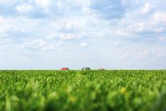 Ajardine con el campo verde y el cielo nublado azul Foto de archivo