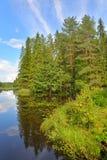 Ajardine con el cielo azul, árboles de pino y un río con los matorrales de Foto de archivo libre de regalías