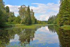 Ajardine con el cielo azul, árboles de pino y un río con los matorrales de Imagenes de archivo