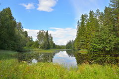 Ajardine con el cielo azul, árboles de pino y un río con los matorrales de Imagen de archivo