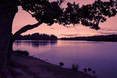 Ajardine con el lago y el bosque Imagenes de archivo