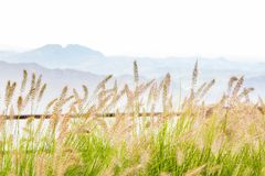 Ajardine con la hierba y las montañas altas en el fondo Imagenes de archivo