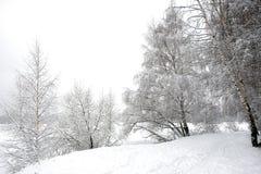 Ajardine con la trayectoria nevada al borde del bosque y del río congelado en un día de invierno nublado Fotos de archivo