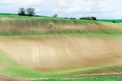 Ajardine con las curvas de campos rurales texturizados balanceo ondulado imagen de archivo