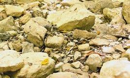 Ajardine con las piedras grandes y pequeñas cubiertas con las hojas caidas Imágenes de archivo libres de regalías