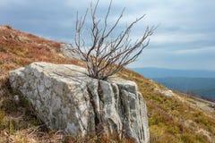 Ajardine con las piedras viejas y el árbol seco en el top de la montaña de Runa, Cárpatos Fotos de archivo