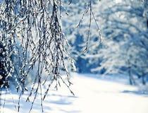 Ajardine con las ramas del abedul cubiertas con los cristales de hielo brillantes o Imágenes de archivo libres de regalías