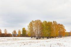 Ajardine con los árboles amarillos en el campo nevoso en día melancólico Imagen de archivo