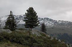 Ajardine con los árboles de pino y las montañas nevosas en tiempo nublado Fotos de archivo