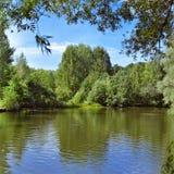 Ajardine con los árboles en la orilla del lago del bosque Imagen de archivo
