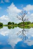 Ajardine con los árboles, reflejando en el agua Fotos de archivo