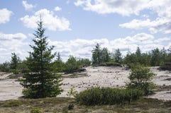 Ajardine con los pinos, las piceas, los alerces y los abedules Día de verano brillante con el cielo azul, las nubes blancas y la  Imagenes de archivo