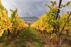 Ajardine con los viñedos del otoño en la región Alsacia, Francia imágenes de archivo libres de regalías