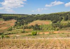 Ajardine con los viñedos y el bosque en las laderas en Borgoña Fotos de archivo