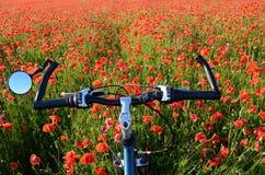 Ajardine con medio de la bicicleta de un campo de la amapola Imagenes de archivo