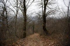 Ajardine con niebla hermosa en bosque en la colina o arrástrese a través de un bosque misterioso del invierno con las hojas de ot Fotos de archivo