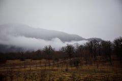 Ajardine con niebla hermosa en bosque en la colina o arrástrese a través de un bosque misterioso del invierno con las hojas de ot Foto de archivo