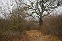 Ajardine con niebla hermosa en bosque en la colina o arrástrese a través de un bosque misterioso del invierno con las hojas de ot Foto de archivo libre de regalías