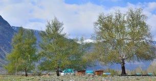 Ajardine con tres abedules en el pie de las montañas Imagen de archivo