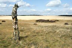 Ajardine con una deriva de arena y un árbol de abedul muerto Fotos de archivo libres de regalías