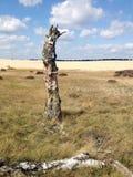 Ajardine con una deriva de arena y un árbol de abedul muerto Foto de archivo