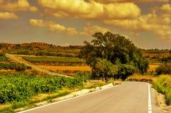 Ajardine con viñedos y un camino secundario en un mediterráneo Imagen de archivo libre de regalías